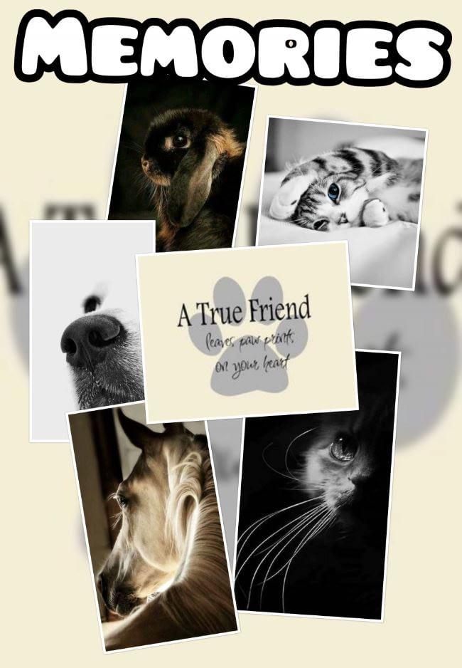 Een gepersonaliseerd kado als herinnering aan je dierbare huisdier