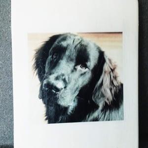 Herinnering - Hond - Memories