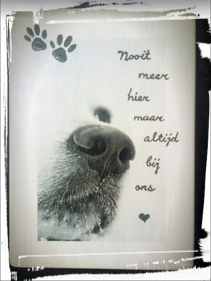 """Bord met foto overleden huisdier en gedicht """"Nooit meer hier"""""""