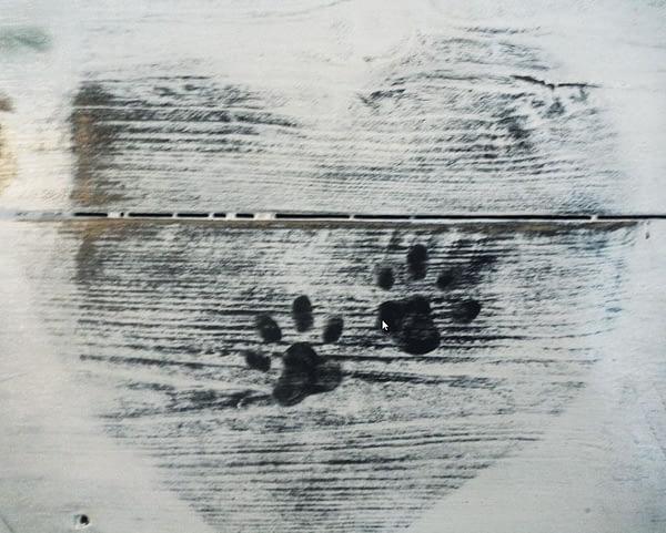 Bord gemaakt van pallethout in landelijke stijl met foto van hondjes en handgeschilderde details