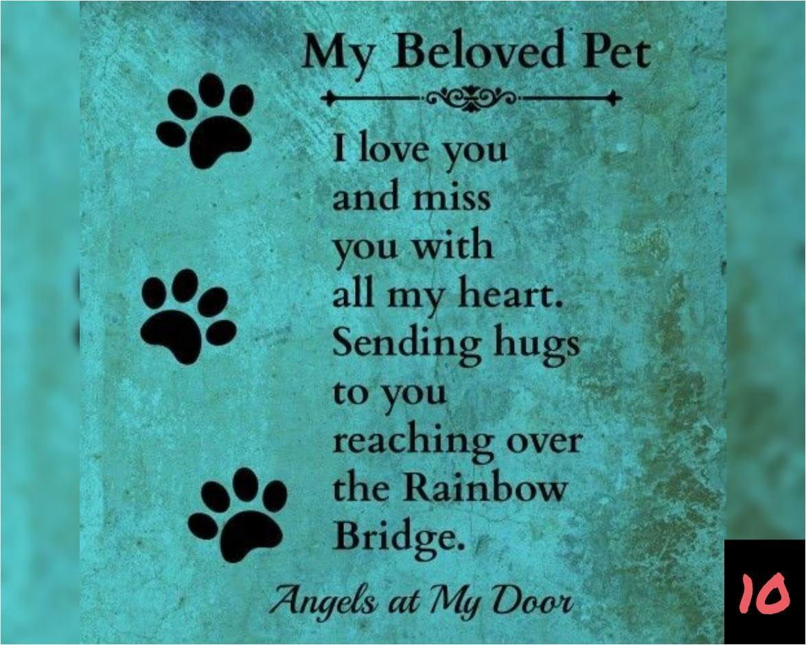 Teksten 10 - My beloved pet
