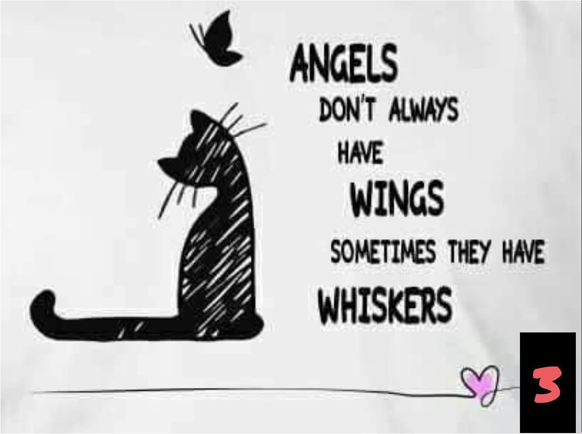 Teksten 03 - Angels-Wings-Whiskers