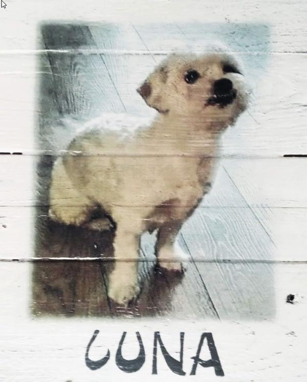 """Deco-bord van pallethout met foto hond """"Luna"""" , naam eronder geschilderd"""