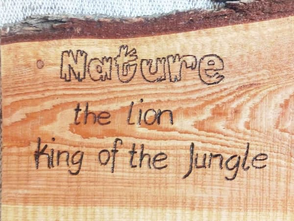 Nature - Lion King of the Jungle