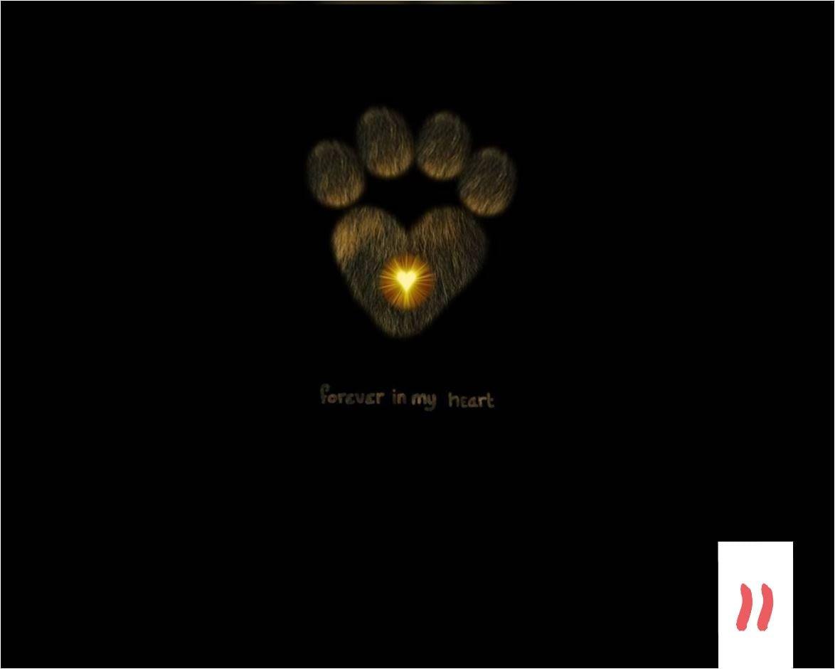 Teksten 11 - Forever in my heart