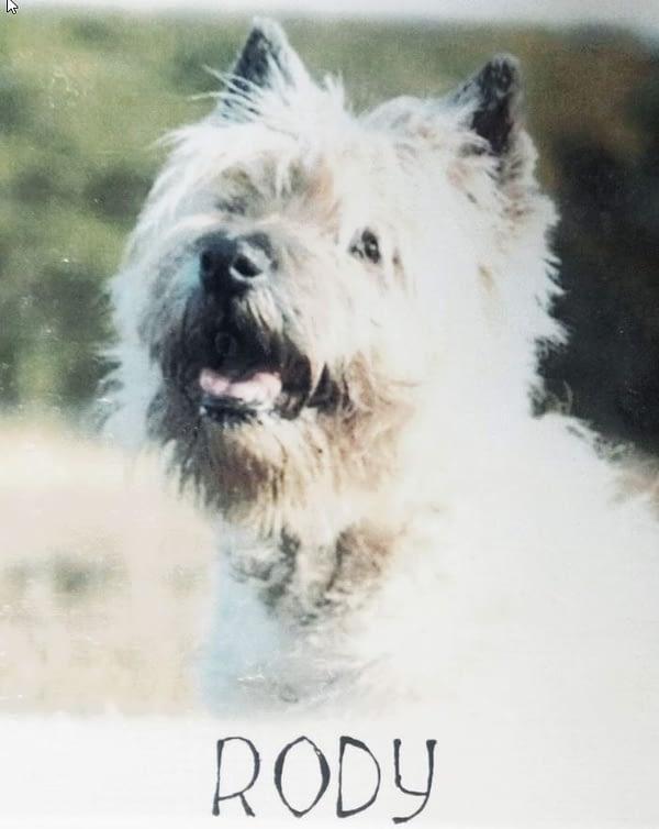 Foto van Rody op MDF met naam hartje en hondenpootje erop geschilderd